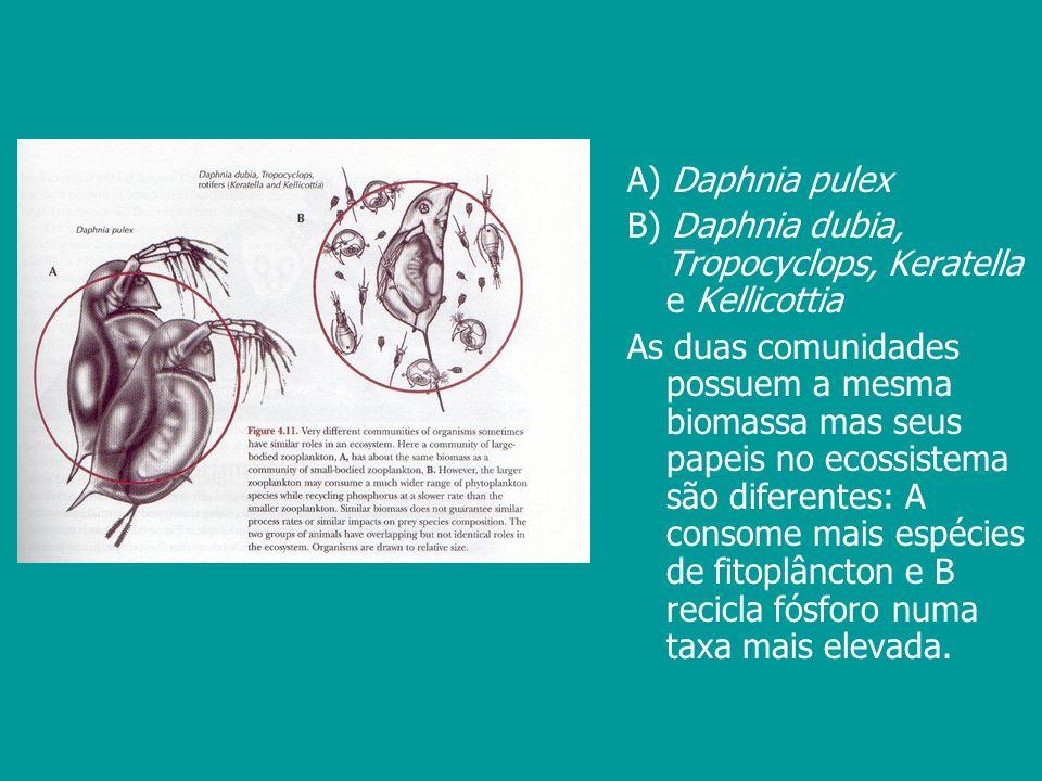 A) Daphnia pulex B) Daphnia dubia, Tropocyclops, Keratella e Kellicottia As duas comunidades possuem a mesma biomassa mas seus papeis no ecossistema s