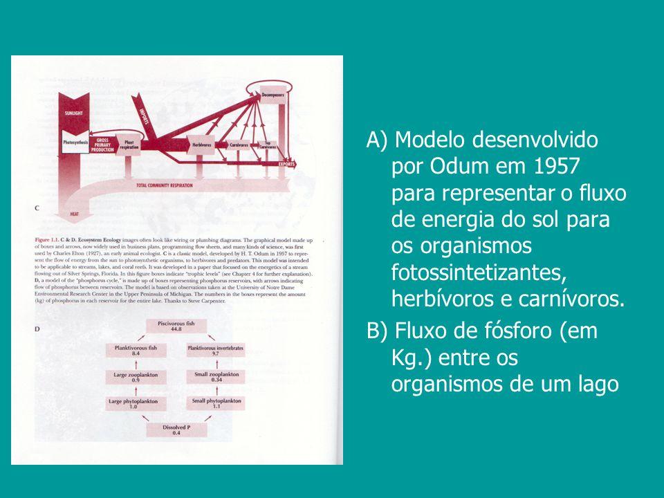 A) Modelo desenvolvido por Odum em 1957 para representar o fluxo de energia do sol para os organismos fotossintetizantes, herbívoros e carnívoros. B)