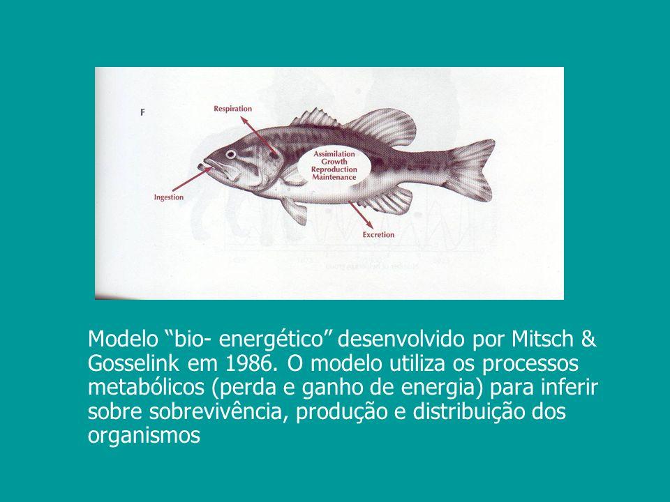 Modelo bio- energético desenvolvido por Mitsch & Gosselink em 1986. O modelo utiliza os processos metabólicos (perda e ganho de energia) para inferir