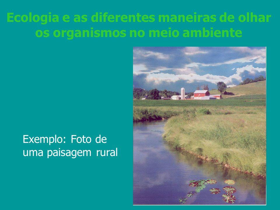Ecologia e as diferentes maneiras de olhar os organismos no meio ambiente Exemplo: Foto de uma paisagem rural
