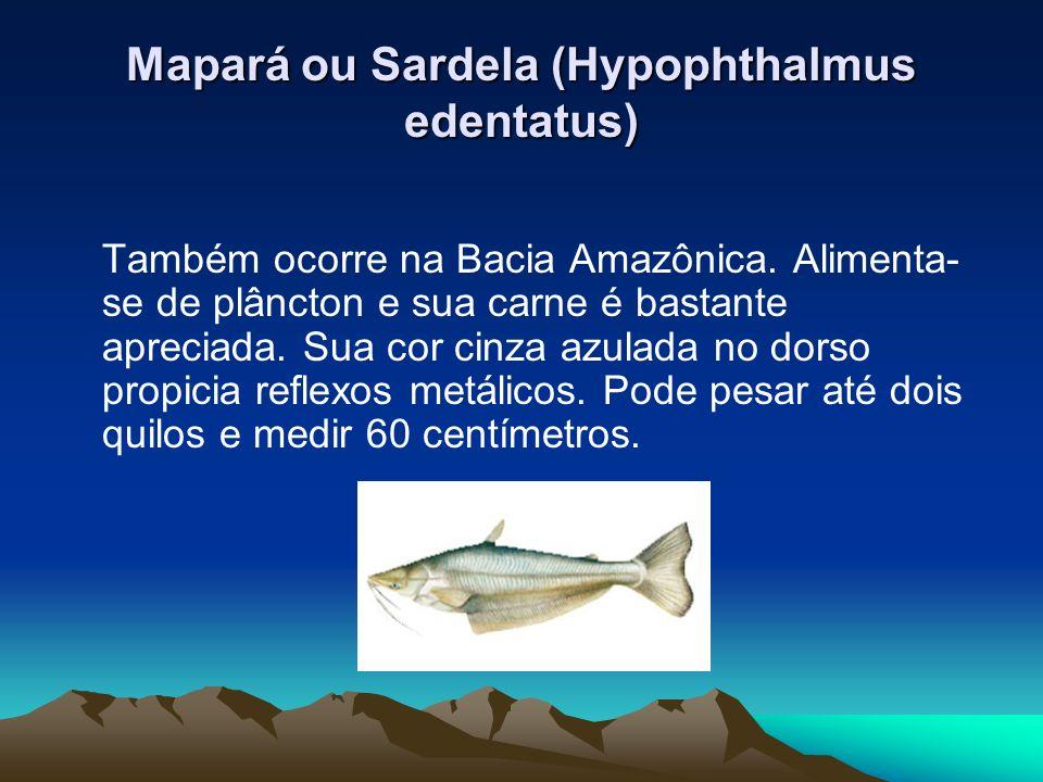 Mapará ou Sardela (Hypophthalmus edentatus) Também ocorre na Bacia Amazônica. Alimenta- se de plâncton e sua carne é bastante apreciada. Sua cor cinza