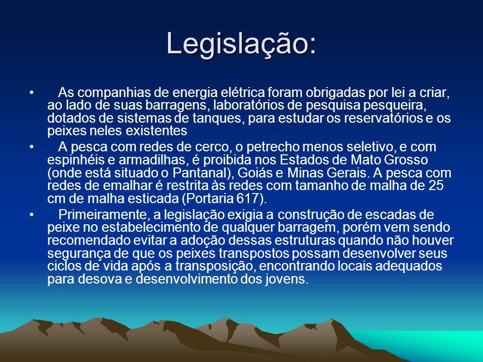 Legislação: As companhias de energia elétrica foram obrigadas por lei a criar, ao lado de suas barragens, laboratórios de pesquisa pesqueira, dotados