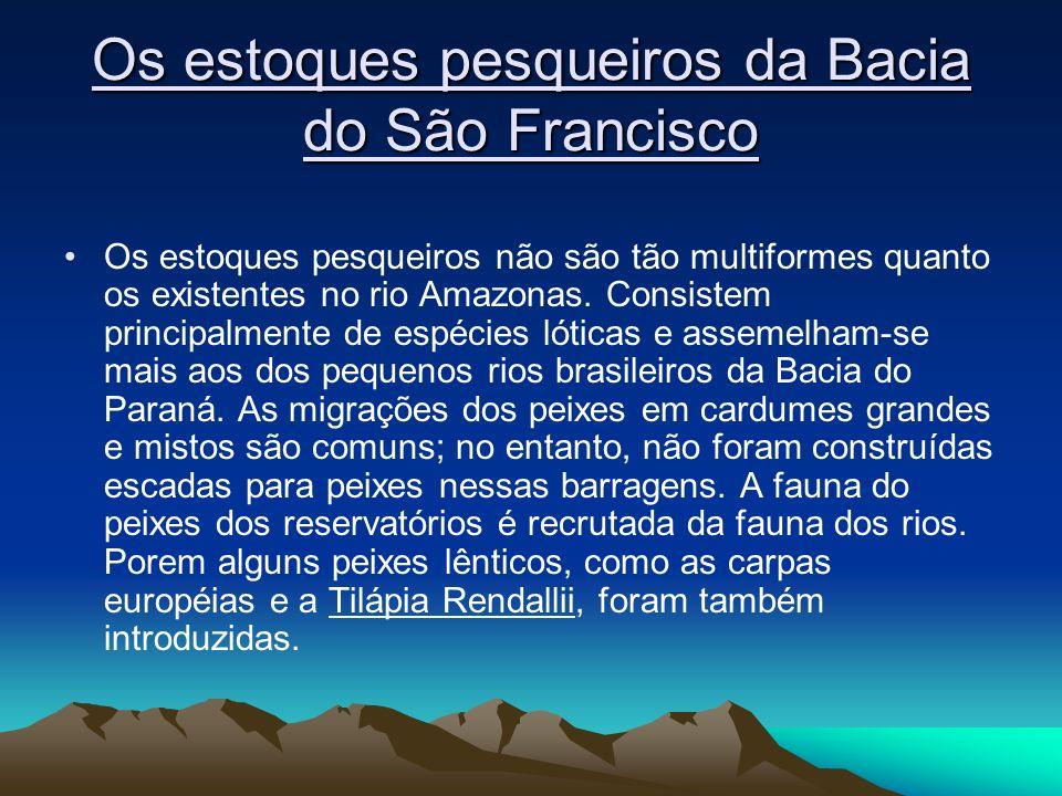 Os estoques pesqueiros da Bacia do São Francisco Os estoques pesqueiros não são tão multiformes quanto os existentes no rio Amazonas. Consistem princi