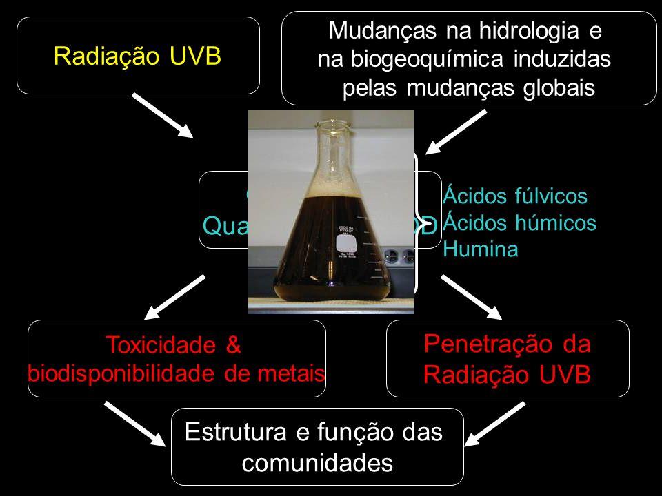 Mudanças na hidrologia e na biogeoquímica induzidas pelas mudanças globais Radiação UVB Toxicidade & biodisponibilidade de metais Penetração da Radiação UVB Estrutura e função das comunidades Qualidade & Quantidade da MOD Ácidos fúlvicos Ácidos húmicos Humina