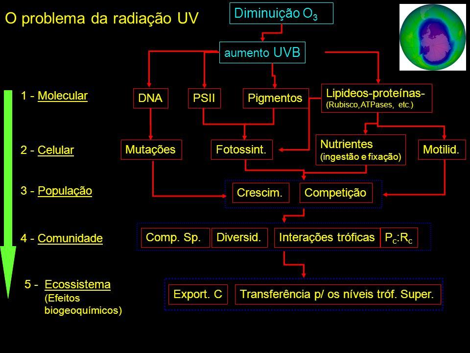 Diminuição O 3 aumento UVB Pigmentos Lipideos-proteínas- (Rubisco, ATPases, etc.) PSIIDNA Nutrientes (ingestão e fixação) Motilid.Fotossint.Mutações CompetiçãoCrescim.