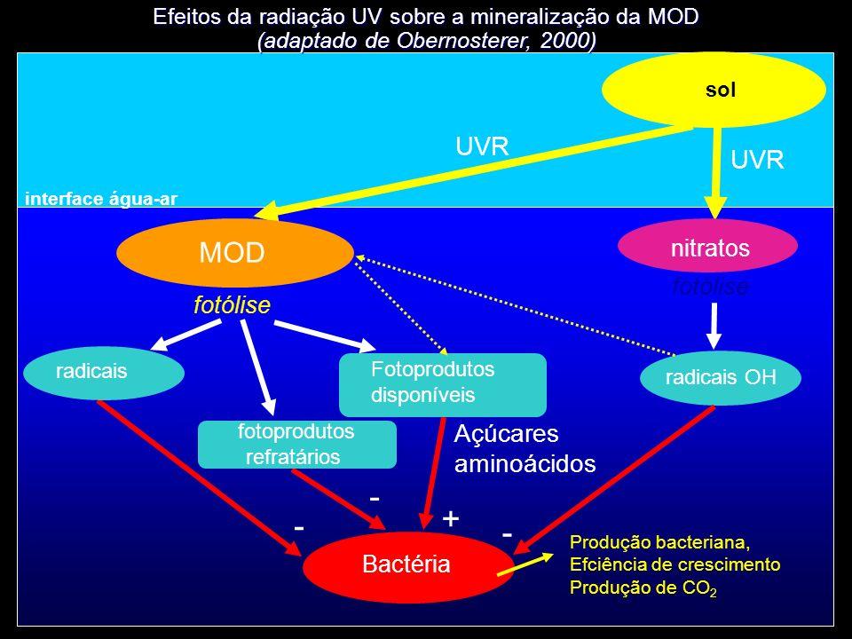 interface água-ar MOD fotólise Bactéria nitratos fotólise UVR radicais OH Fotoprodutos disponíveis - - + sol Efeitos da radiação UV sobre a mineralização da MOD (adaptado de Obernosterer, 2000) fotoprodutos refratários radicais Açúcares aminoácidos UVR - Produção bacteriana, Efciência de crescimento Produção de CO 2