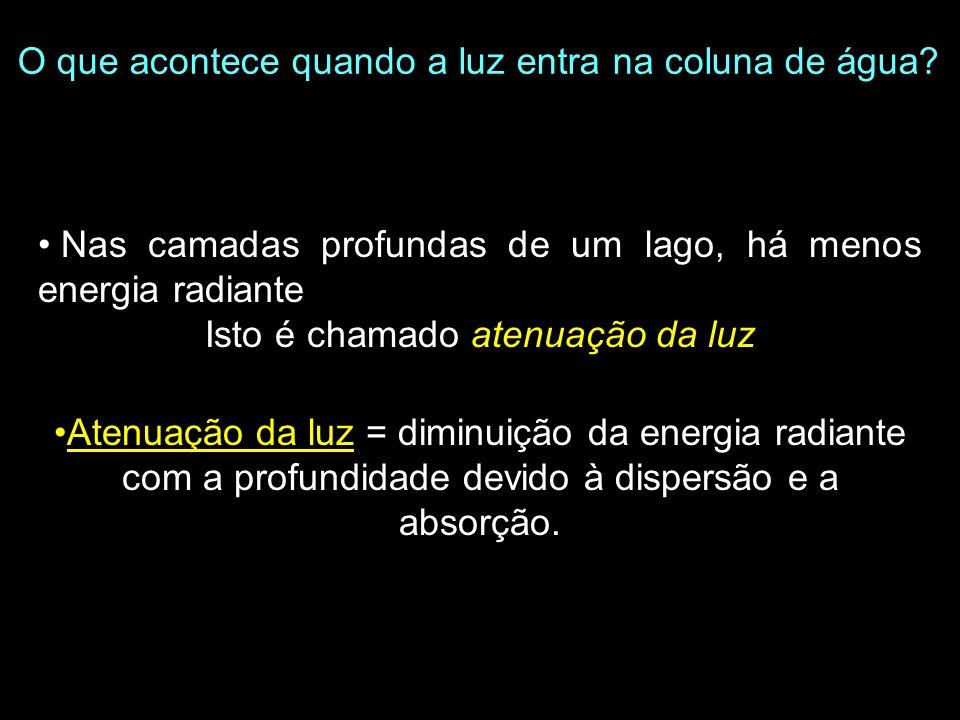 Prof. Luz x x x x Plotando perfis de luz Lei de Bouguer