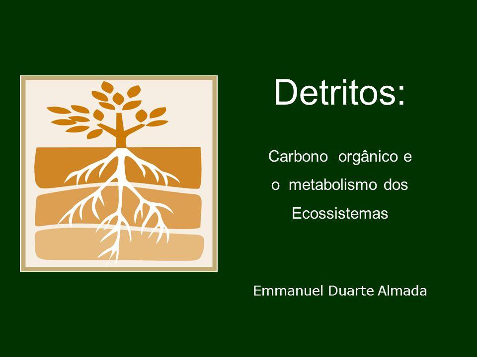 Metabolismo de carbono em rios DOM e POM alóctones são as fontes dominantes de matéria e energia Relação DOM : POM = 10 : 1 até 25 : 1 Maiores taxas de decomposição de DOM DOMR (refratário) vai rio abaixo