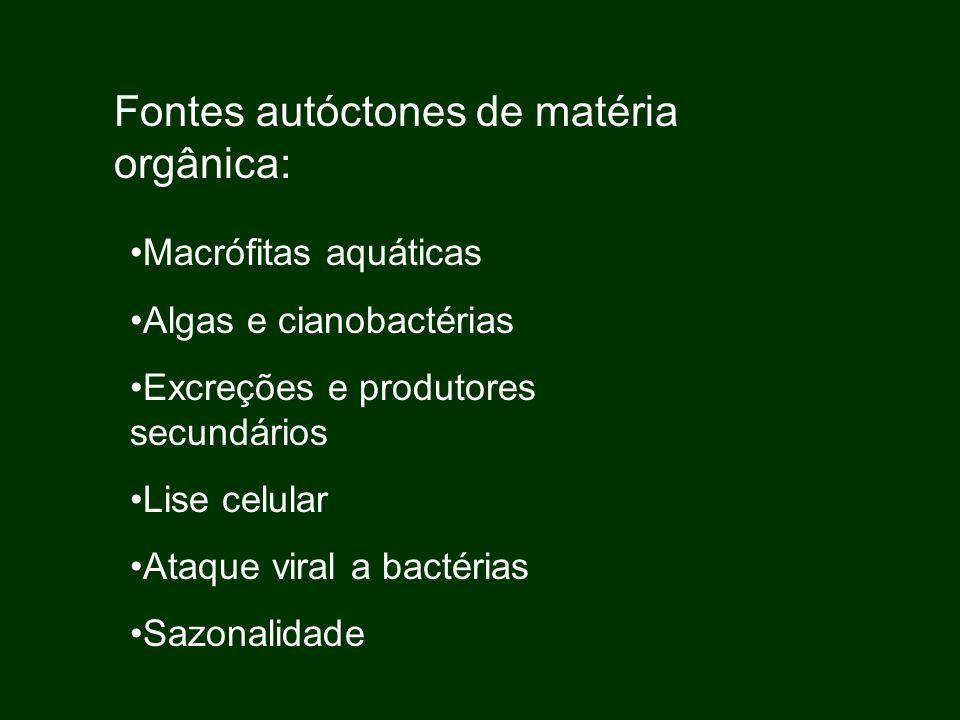 Fontes autóctones de matéria orgânica: Macrófitas aquáticas Algas e cianobactérias Excreções e produtores secundários Lise celular Ataque viral a bact