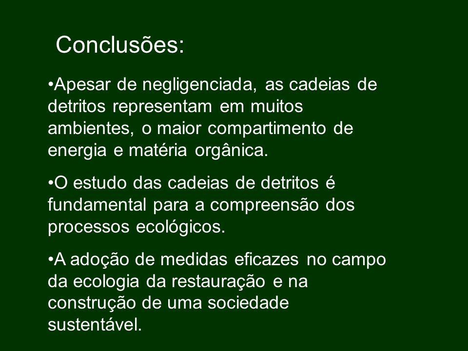 Conclusões: Apesar de negligenciada, as cadeias de detritos representam em muitos ambientes, o maior compartimento de energia e matéria orgânica. O es