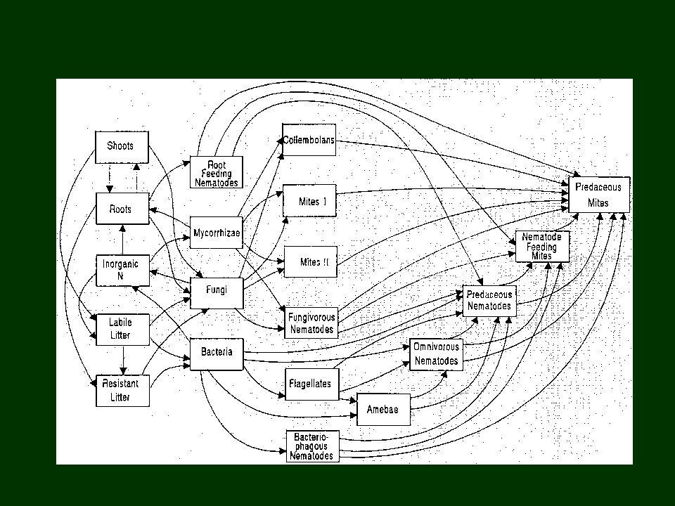 Composição da matéria orgânica detrital : POM: Matéria Orgânica Particulada DOM: Matéria Orgânica Dissolvida