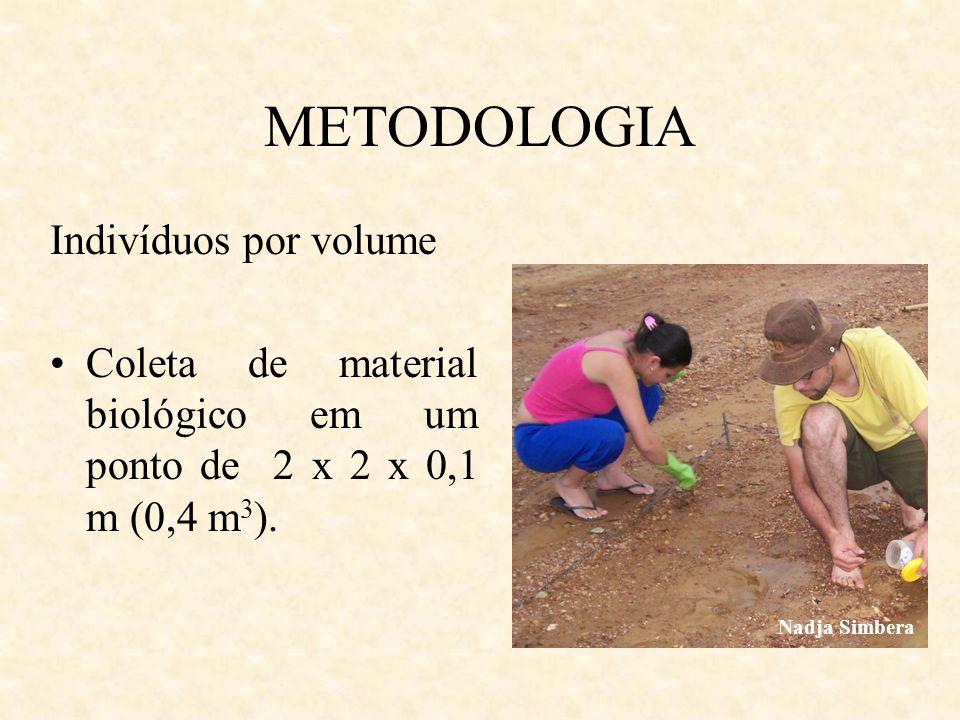 METODOLOGIA Indivíduos por volume Coleta de material biológico em um ponto de 2 x 2 x 0,1 m (0,4 m 3 ). Nadja Simbera
