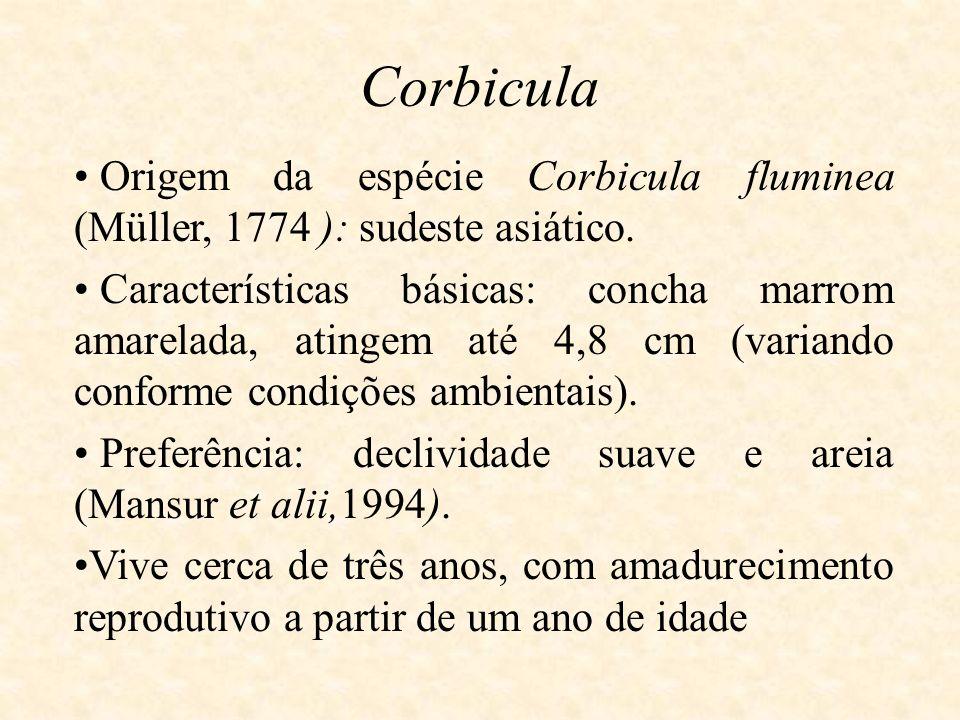 Origem da espécie Corbicula fluminea (Müller, 1774 ): sudeste asiático. Características básicas: concha marrom amarelada, atingem até 4,8 cm (variando