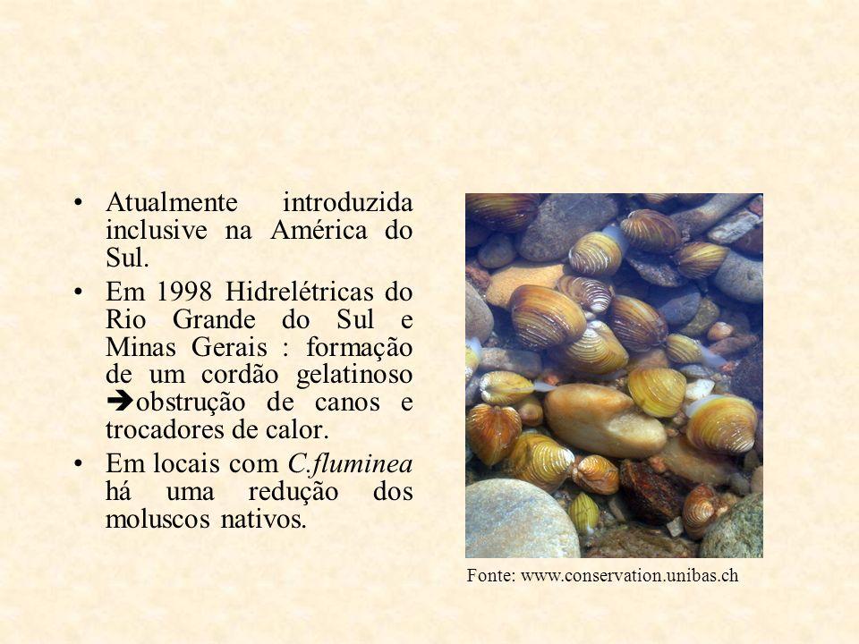 Atualmente introduzida inclusive na América do Sul. Em 1998 Hidrelétricas do Rio Grande do Sul e Minas Gerais : formação de um cordão gelatinoso obstr