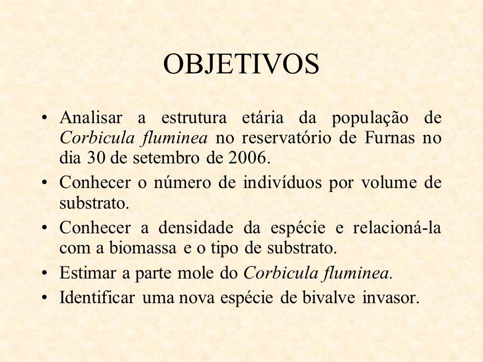 OBJETIVOS Analisar a estrutura etária da população de Corbicula fluminea no reservatório de Furnas no dia 30 de setembro de 2006. Conhecer o número de