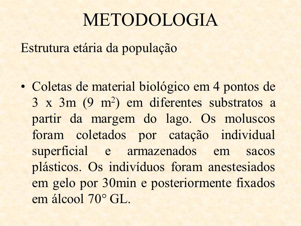 METODOLOGIA Estrutura etária da população Coletas de material biológico em 4 pontos de 3 x 3m (9 m 2 ) em diferentes substratos a partir da margem do