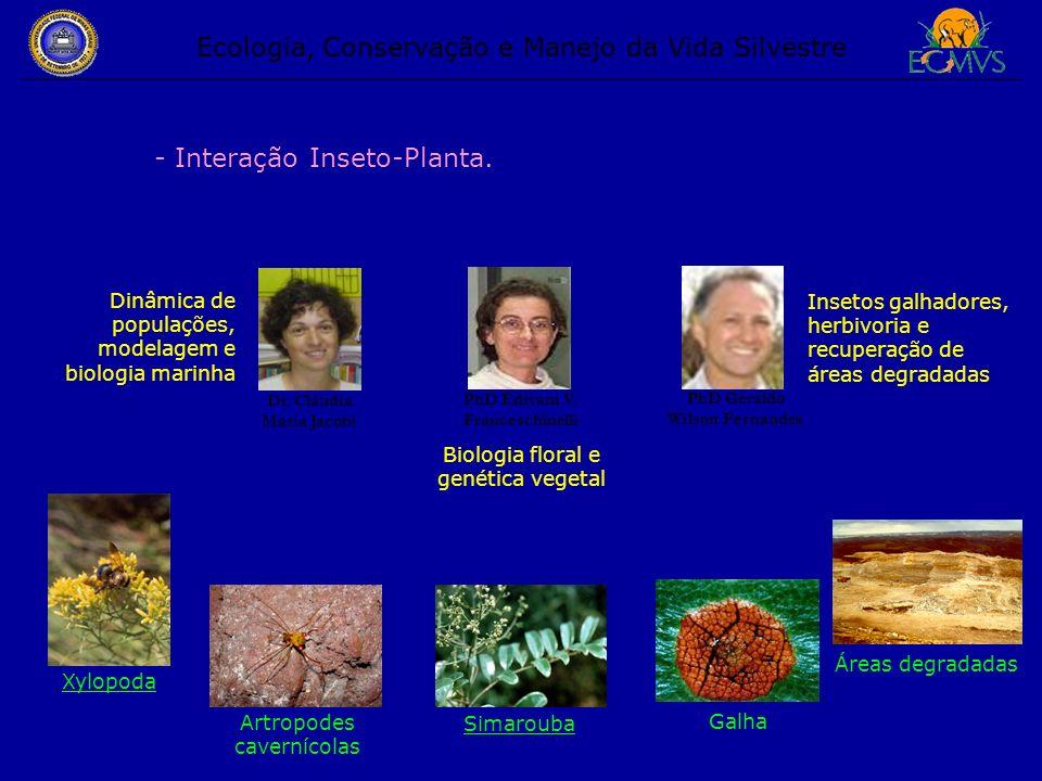 Ecologia, Conservação e Manejo da Vida Silvestre - Interação Inseto-Planta. Dr. Cláudia Maria Jacobi PhD Edivani V. Franceschinelli Dinâmica de popula