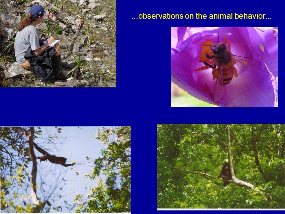...observations on the animal behavior...