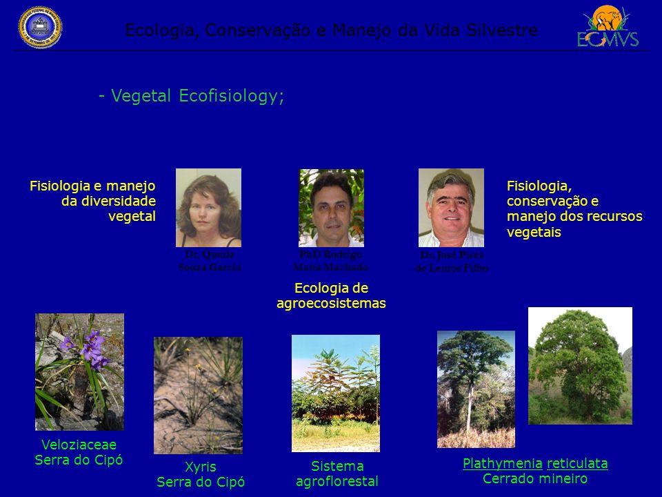 Ecologia, Conservação e Manejo da Vida Silvestre - Vegetal Ecofisiology; Dr. José Pires de Lemos Filho Dr. Queila Souza Garcia Fisiologia, conservação
