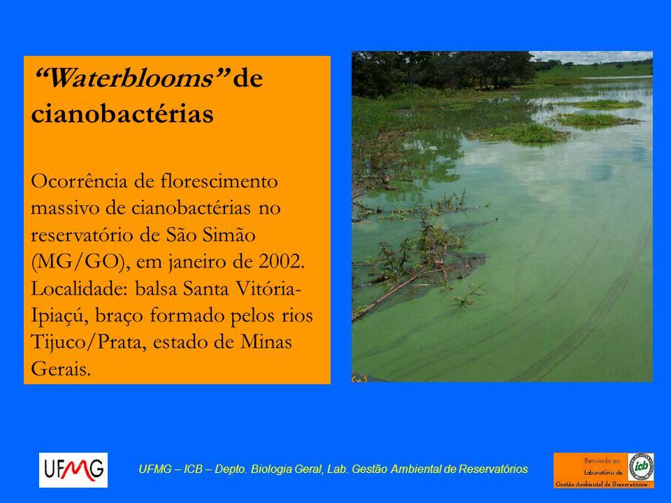 Waterblooms de cianobactérias Ocorrência de florescimento massivo de cianobactérias no reservatório de São Simão (MG/GO), em janeiro de 2002. Localida