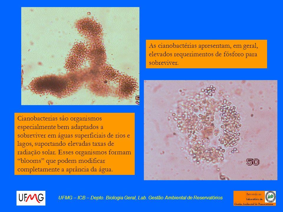 Cianobacterias sâo organismos especialmente bem adaptados a sobreviver em águas superficiais de rios e lagos, suportando elevadas taxas de radiação so