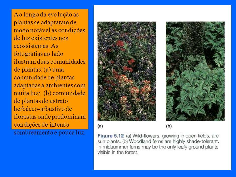 Ao longo da evolução as plantas se adaptaram de modo notável às condições de luz existentes nos ecossistemas. As fotografias ao lado ilustram duas com