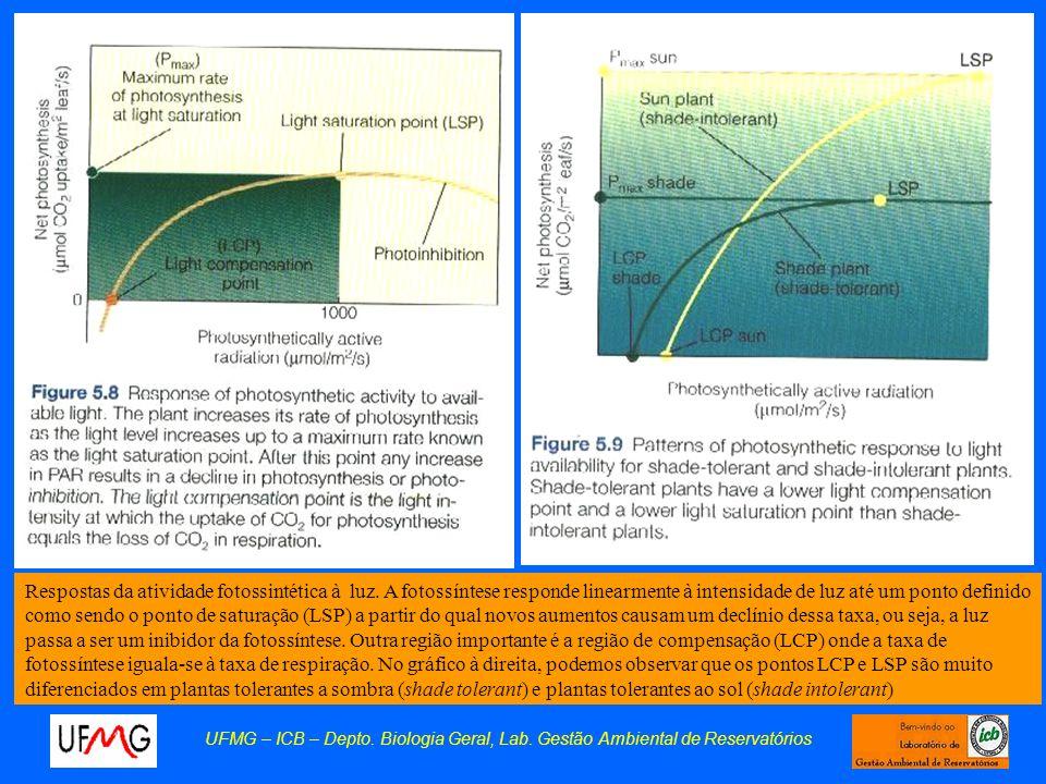 UFMG – ICB – Depto. Biologia Geral, Lab. Gestão Ambiental de Reservatórios Respostas da atividade fotossintética à luz. A fotossíntese responde linear