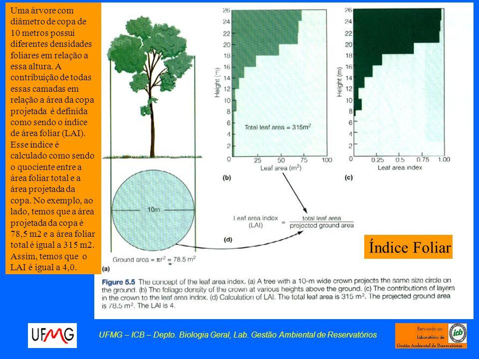 UFMG – ICB – Depto. Biologia Geral, Lab. Gestão Ambiental de Reservatórios Índice Foliar Uma árvore com diâmetro de copa de 10 metros possui diferente