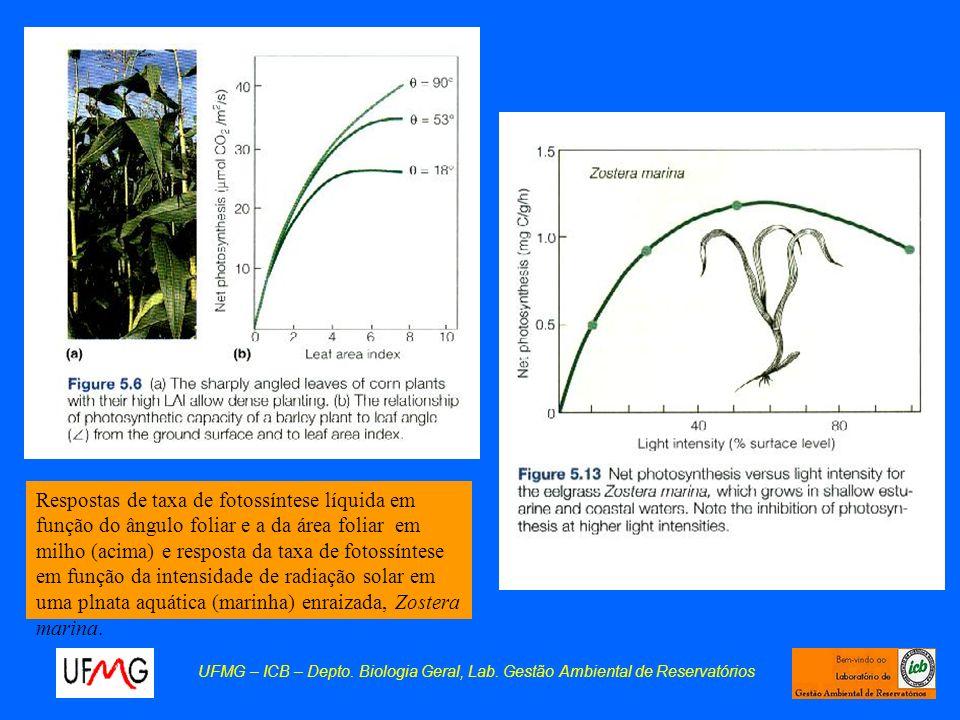 UFMG – ICB – Depto. Biologia Geral, Lab. Gestão Ambiental de Reservatórios Respostas de taxa de fotossíntese líquida em função do ângulo foliar e a da