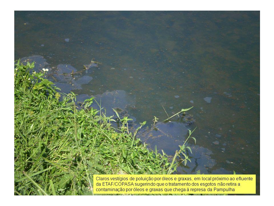 Claros vestígios de poluição por óleos e graxas, em local próximo ao efluente da ETAF/COPASA sugerindo que o tratamento dos esgotos não retira a conta
