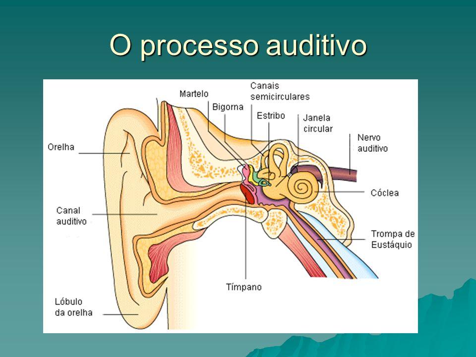 O processo auditivo