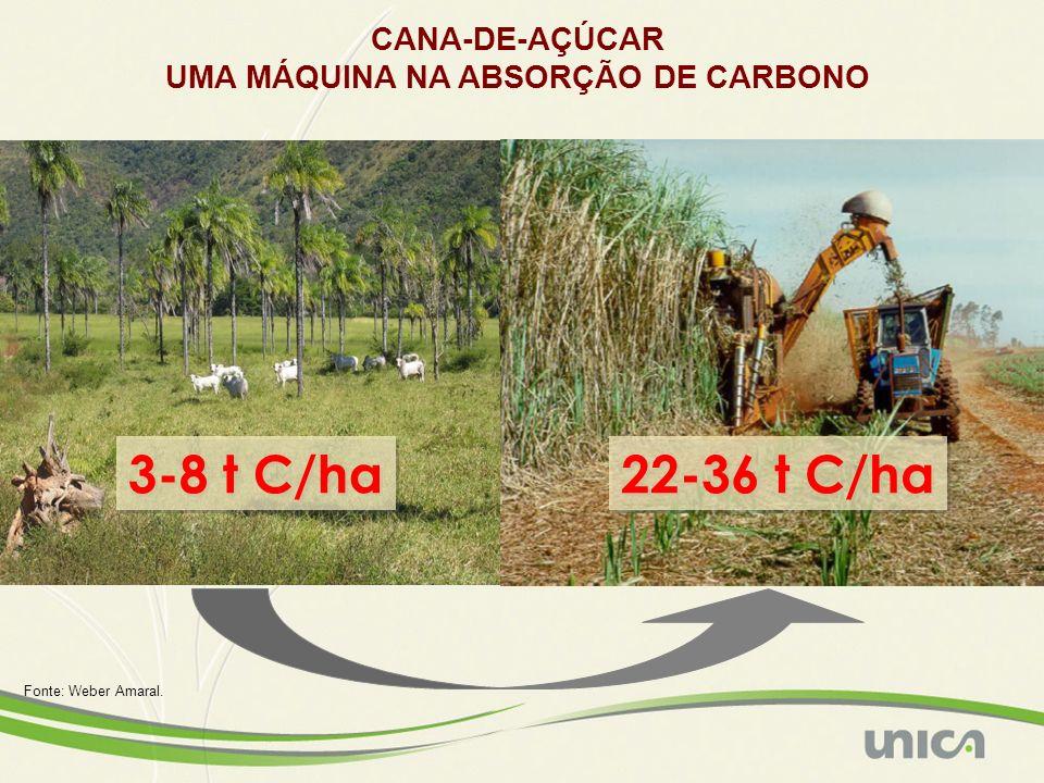 3-8 t C/ha 22-36 t C/ha CANA-DE-AÇÚCAR UMA MÁQUINA NA ABSORÇÃO DE CARBONO Fonte: Weber Amaral.