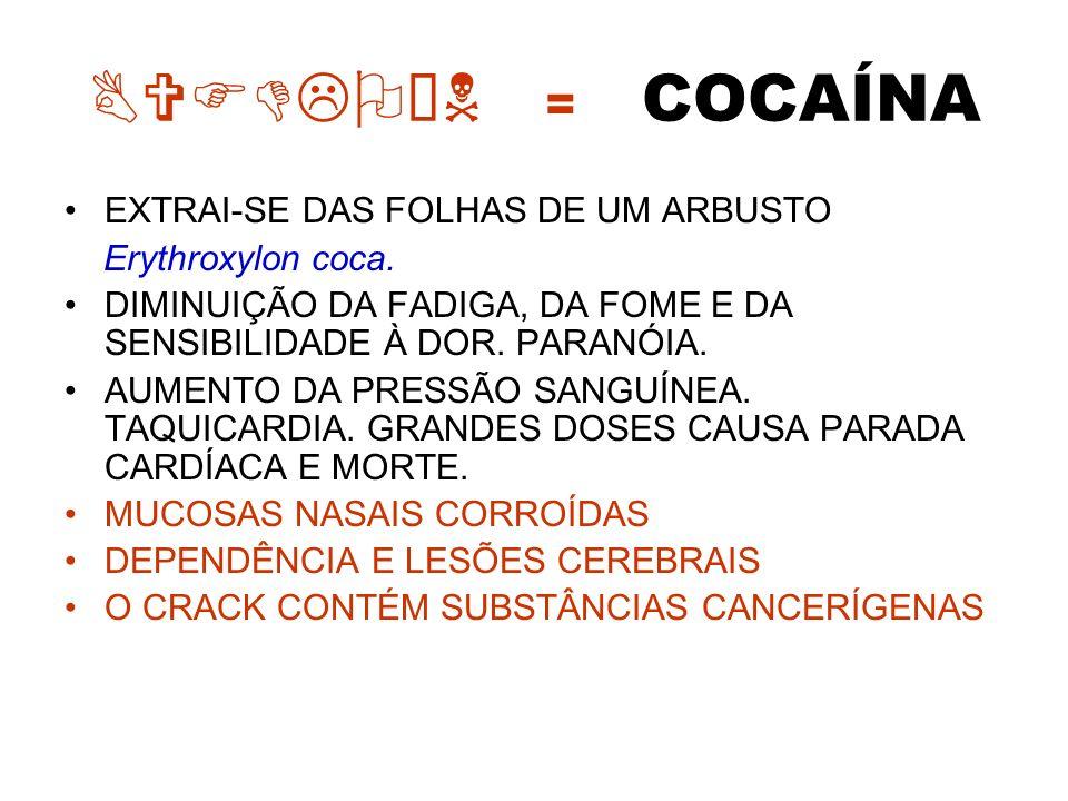 = COCAÍNA EXTRAI-SE DAS FOLHAS DE UM ARBUSTO Erythroxylon coca. DIMINUIÇÃO DA FADIGA, DA FOME E DA SENSIBILIDADE À DOR. PARANÓIA. AUMENTO DA PRESSÃO S