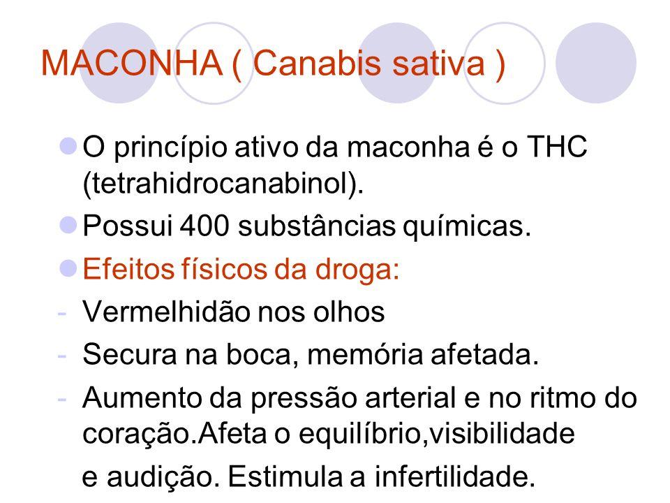 MACONHA ( Canabis sativa ) O princípio ativo da maconha é o THC (tetrahidrocanabinol). Possui 400 substâncias químicas. Efeitos físicos da droga: -Ver