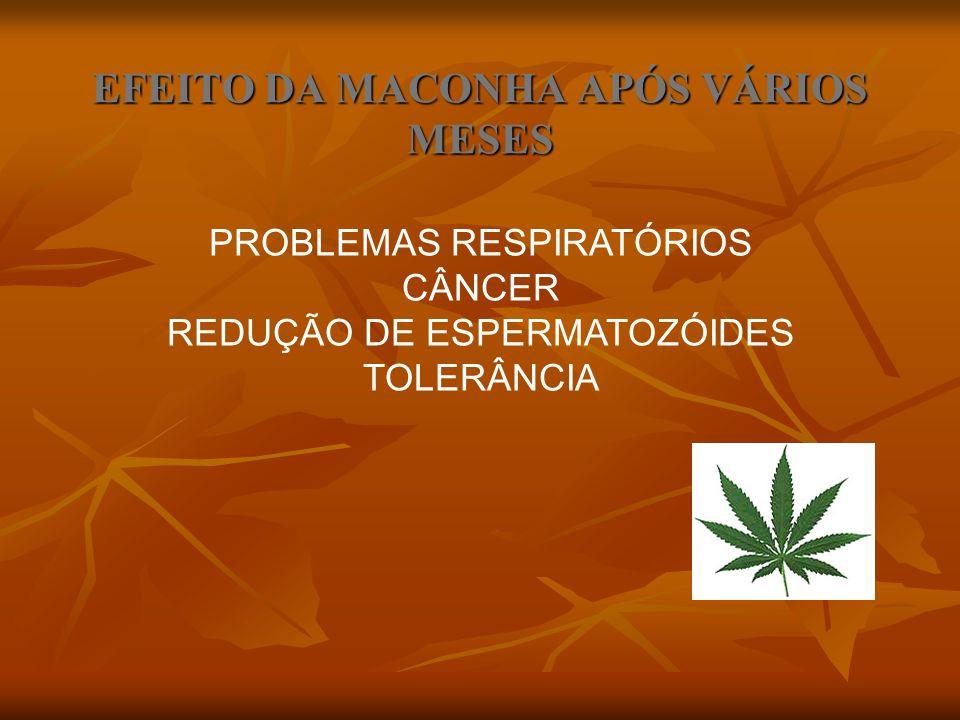 EFEITO DA MACONHA APÓS VÁRIOS MESES PROBLEMAS RESPIRATÓRIOS CÂNCER REDUÇÃO DE ESPERMATOZÓIDES TOLERÂNCIA