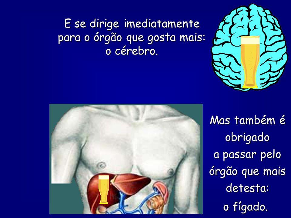 O sangue tem que circular pelo corpo inteiro, porque é responsável pela nutrição de todos os órgãos. E o álcool (esperto!) vai de carona.