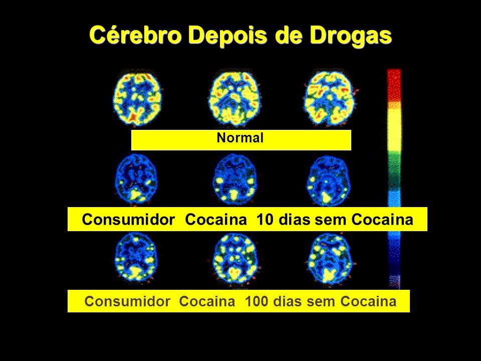 Nem todos os usuários se tornam dependentes das drogas