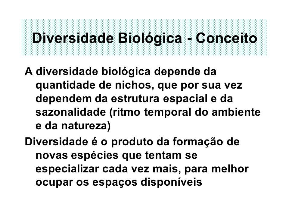 Diversidade Biológica - Conceito A diversidade biológica depende da quantidade de nichos, que por sua vez dependem da estrutura espacial e da sazonali