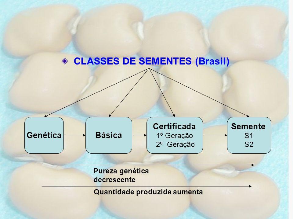GenéticaBásica Certificada 1º Geração 2º Geração Semente S1 S2 Pureza genética decrescente CLASSES DE SEMENTES (Brasil) Quantidade produzida aumenta