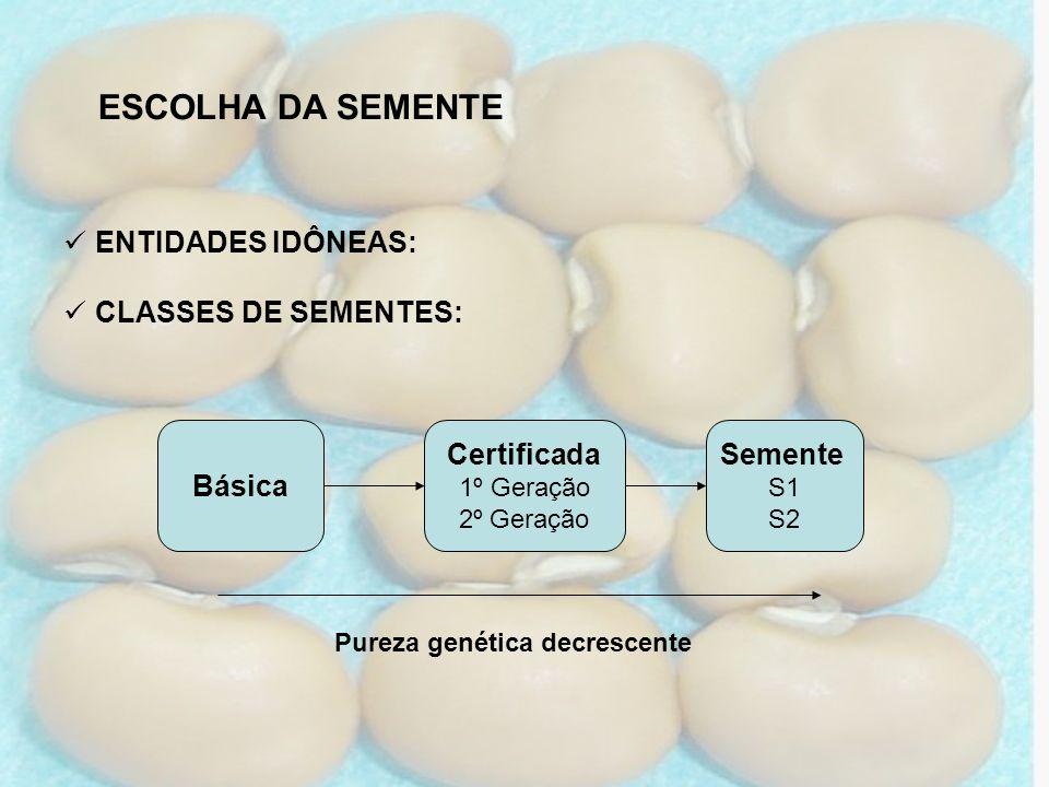 ESCOLHA DA SEMENTE ENTIDADES IDÔNEAS: CLASSES DE SEMENTES: Básica Certificada 1º Geração 2º Geração Semente S1 S2 Pureza genética decrescente