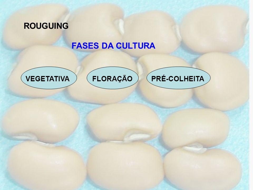 ROUGUING VEGETATIVA FLORAÇÃO PRÉ-COLHEITA FASES DA CULTURA