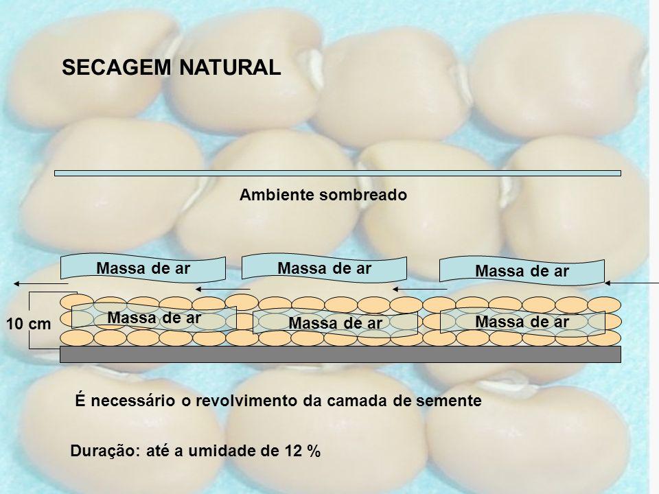 SECAGEM NATURAL 10 cm Duração: até a umidade de 12 % Massa de ar É necessário o revolvimento da camada de semente Ambiente sombreado