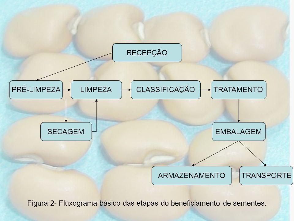 RECEPÇÃO PRÉ-LIMPEZA SECAGEM LIMPEZACLASSIFICAÇÃOTRATAMENTO EMBALAGEM ARMAZENAMENTOTRANSPORTE Figura 2- Fluxograma básico das etapas do beneficiamento