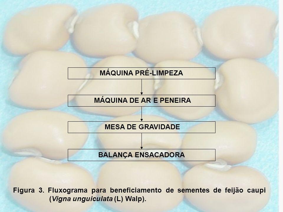 MESA DE GRAVIDADE MÁQUINA DE AR E PENEIRA MÁQUINA PRÉ-LIMPEZA BALANÇA ENSACADORA Figura 3. Fluxograma para beneficiamento de sementes de feijão caupi