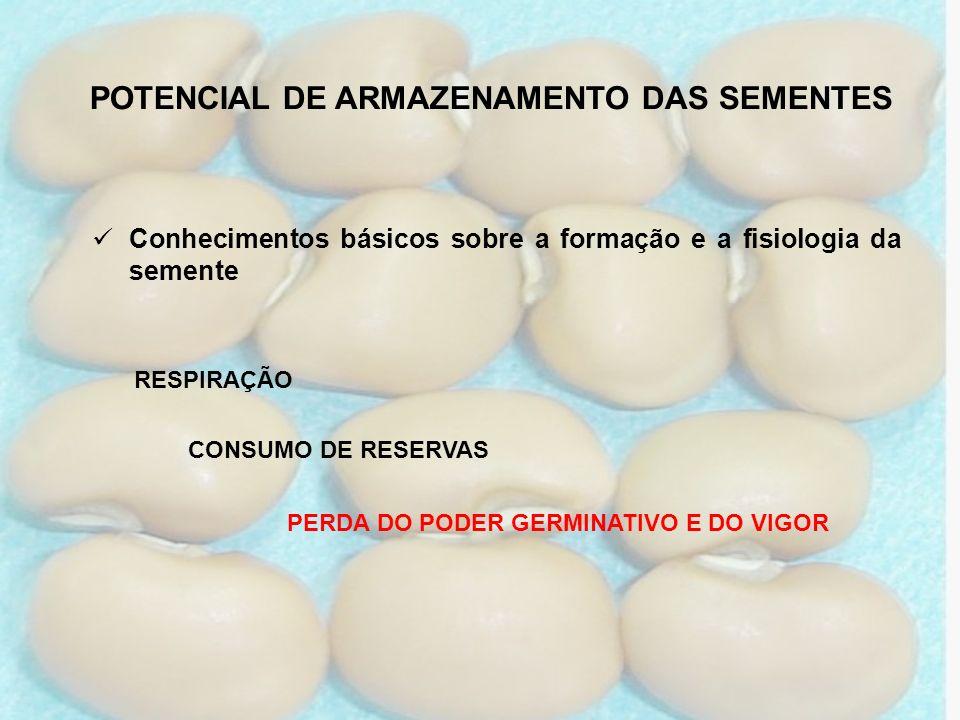 POTENCIAL DE ARMAZENAMENTO DAS SEMENTES Conhecimentos básicos sobre a formação e a fisiologia da semente CONSUMO DE RESERVAS RESPIRAÇÃO PERDA DO PODER