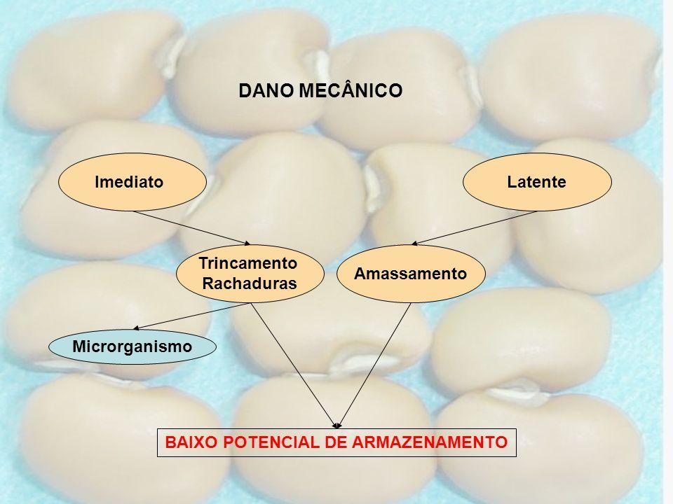DANO MECÂNICO Amassamento Latente Trincamento Rachaduras Microrganismo BAIXO POTENCIAL DE ARMAZENAMENTO Imediato