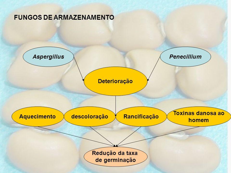 Aquecimento PenecilliumAspergillus Deterioração FUNGOS DE ARMAZENAMENTO Redução da taxa de germinação descoloraçãoRancificação Toxinas danosa ao homem