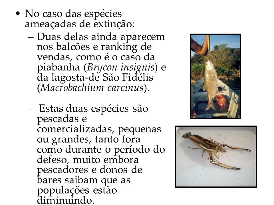 No caso das espécies ameaçadas de extinção: –Duas delas ainda aparecem nos balcões e ranking de vendas, como é o caso da piabanha (Brycon insignis) e