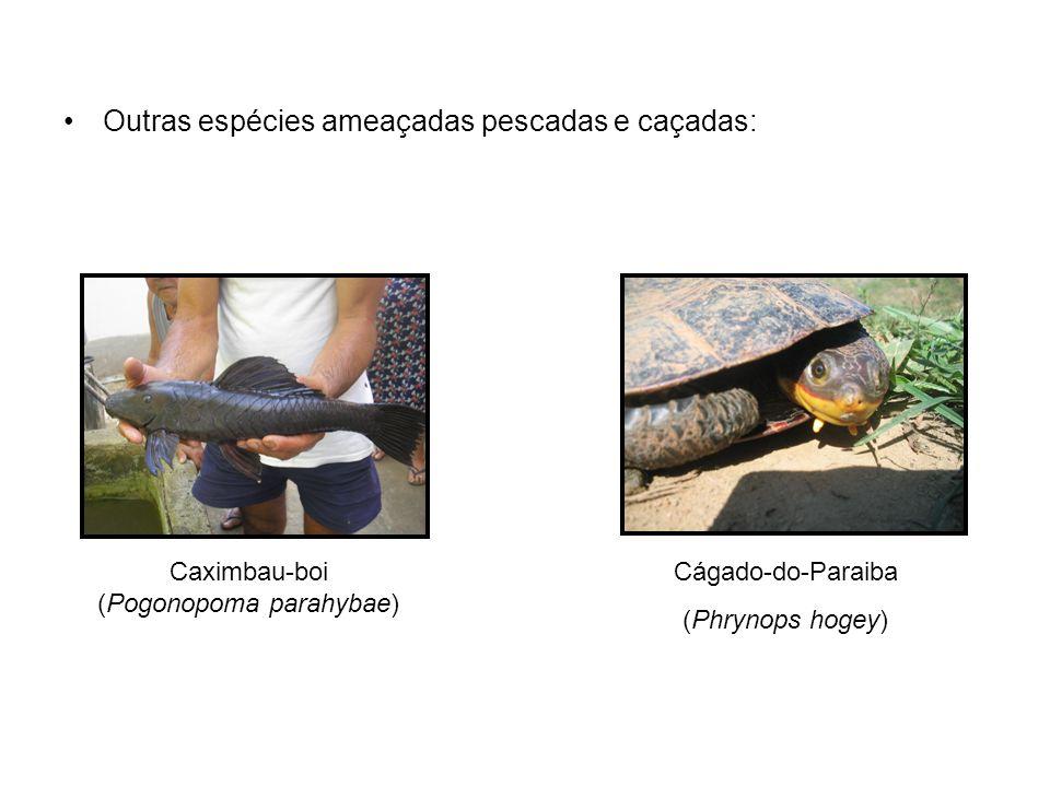 Outras espécies ameaçadas pescadas e caçadas: Caximbau-boi (Pogonopoma parahybae) Cágado-do-Paraiba (Phrynops hogey)