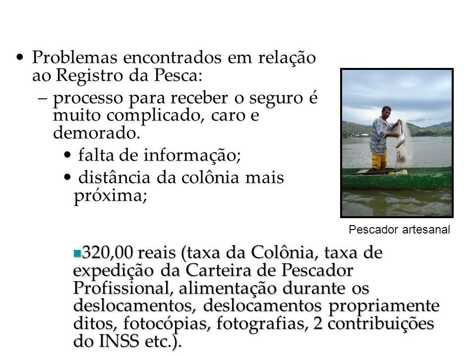 Resultados e Discussão Contribuição para o caos pesqueiro: –Inexistência de fiscalização nas peixarias; –Pouquíssima fiscalização dentro do Rio; –Falta de política ambiental municipal; –Atraso no desembolso do Seguro Desemprego Armadilhas para capturar lagosta-de-São Fidélis.